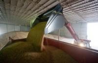 Киевские власти вывозят с Донбасса стратегические запасы зерна (Киевские власти вывозят с Донбасса стратегические запасы зерна)